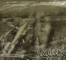campo di grano by mario farinato