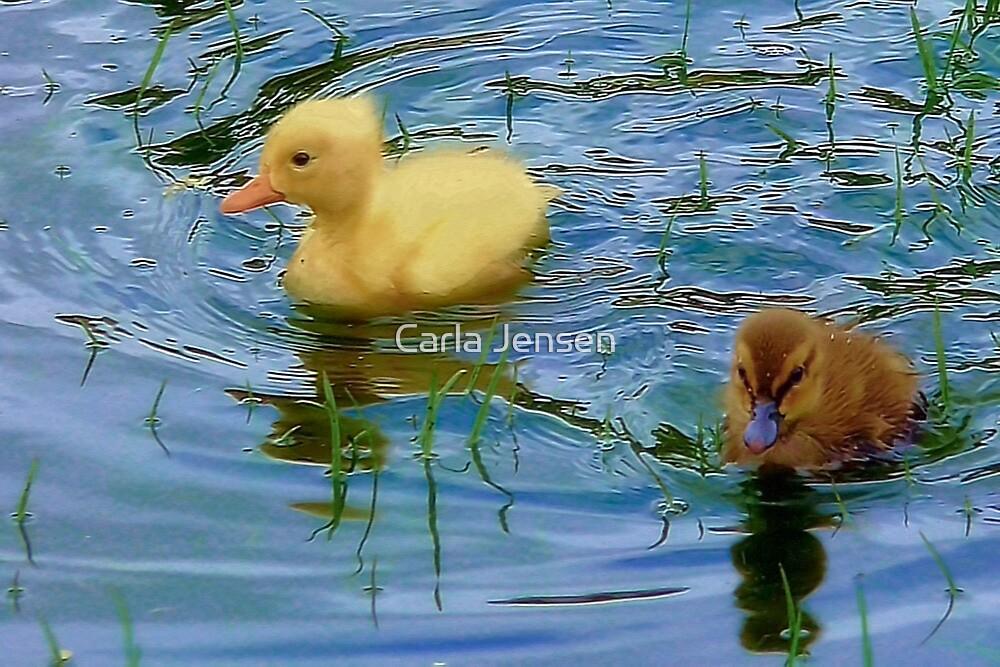 Baby Ducklings by Carla Jensen