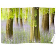 Bluebell Forest Poster