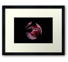 Emerging Queen of the Night Tulip Framed Print