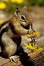Dandelions A Plenty by Betsy  Seeton