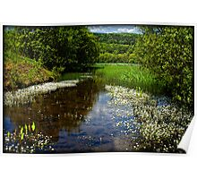 A tranquil scene - Cullaloe Nature  Reserve Poster
