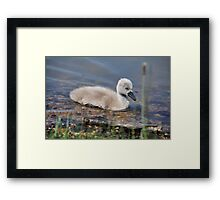 So small and cute... Framed Print