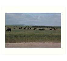 Grazing Beneath Irrigation Water Art Print