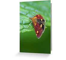 Red wings and yellow spots Greeting Card