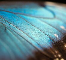 Wings of pure blue by Darren Bailey LRPS