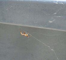 Spider by Katz Karma