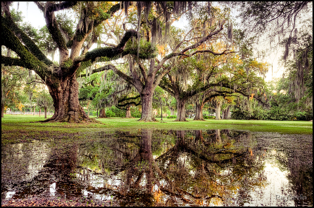 Cypress Reflections by RayDevlin