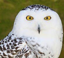 Look into my eyes! by Ronny Falkenstein