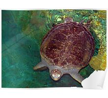 Sea turtle at the aquarium. Poster