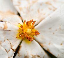 Flower Macro by Presence