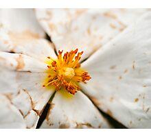 Flower Macro Photographic Print