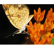 Hearts On The Wing Photographic Print