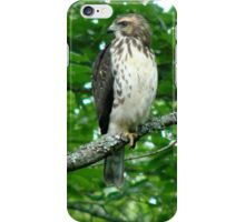 Young Red-Tailed Hawk iPhone Case/Skin