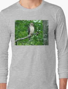 Young Red-Tailed Hawk Long Sleeve T-Shirt