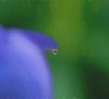 Drop of Water by KathleenRinker
