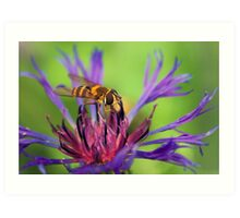 *Sipping nectar* Art Print