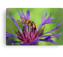 *Sipping nectar* Canvas Print