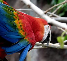 Brightly coloured bird by Clare Forder