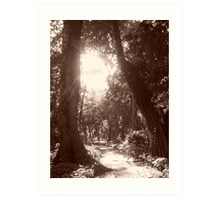 Jardim Botanico Art Print