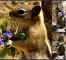 Chippy Has A Bouquet For You! by Betsy  Seeton