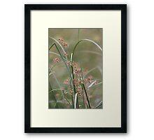 Wild flora V 5406 Framed Print