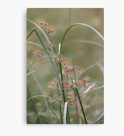 Wild flora V 5406 Canvas Print