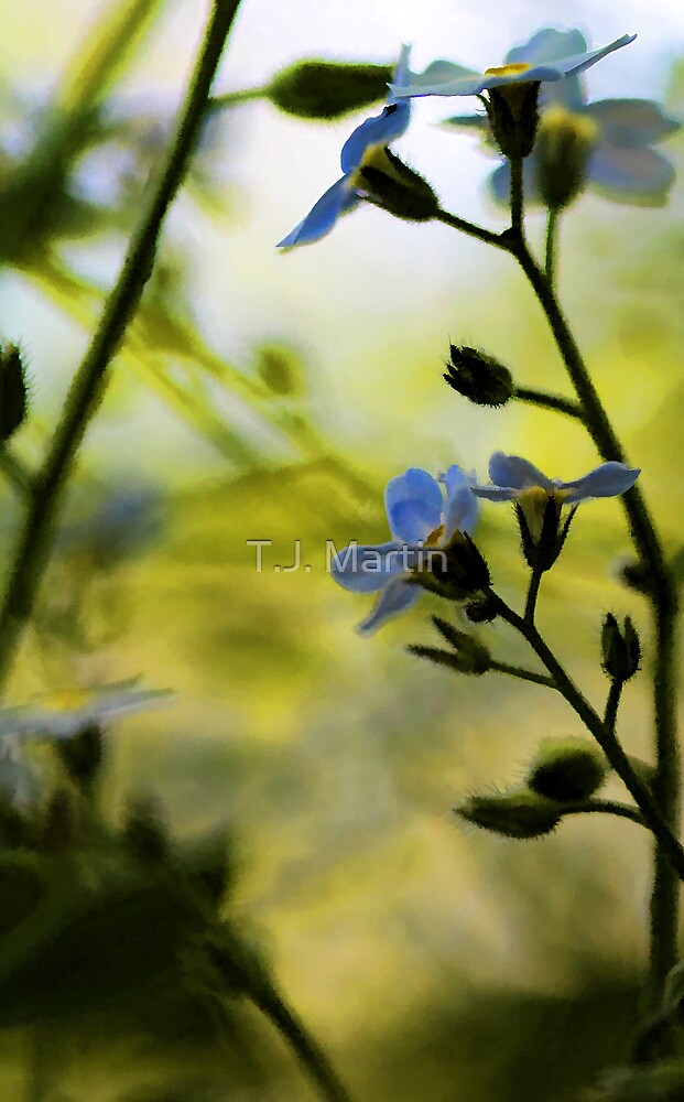 Forget-Me-Not by T.J. Martin