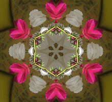Mandala with pink and white petals. by Marilyn Baldey