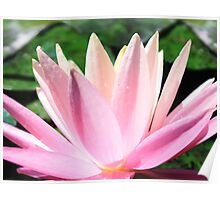 Luminescent Lily Poster