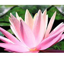 Luminescent Lily Photographic Print