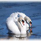 Swan Love by Mattie Bryant