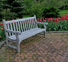 a bench among tulips by 1busymom