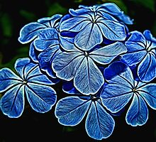 Painted Plumbago by Judy Vincent