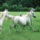 Three Arabians by WTBird