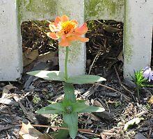 Little Orange Flower in the Spotlight by angieschlauch