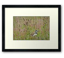 natural habitat Framed Print