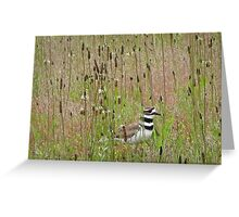 natural habitat Greeting Card