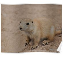 The Baby Prairie Dog I Poster