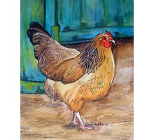 Chook at the Barn Door Photographic Print