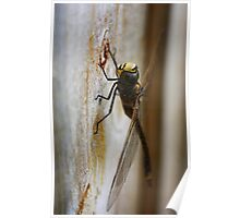 Dragonfly... Poster