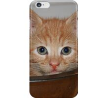 Kitten in a Bowl iPhone Case/Skin