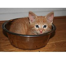 Kitten in a Bowl Photographic Print