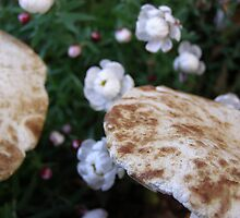 my shrooms by Tanisha Jowsey