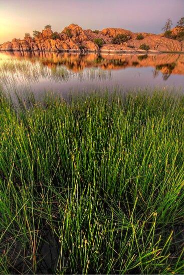 The Secret Life of Grass by Bob Larson