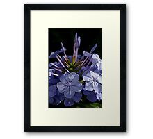 Going Around Framed Print