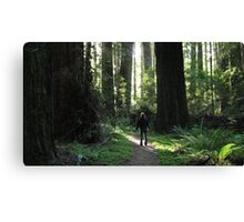 Awe Amongst the Redwoods Canvas Print