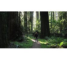 Awe Amongst the Redwoods Photographic Print