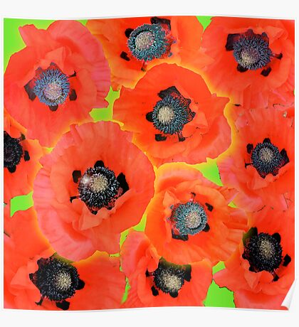 Red Flower, Poppy flower field Poster