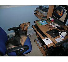 Watchdog Photographic Print